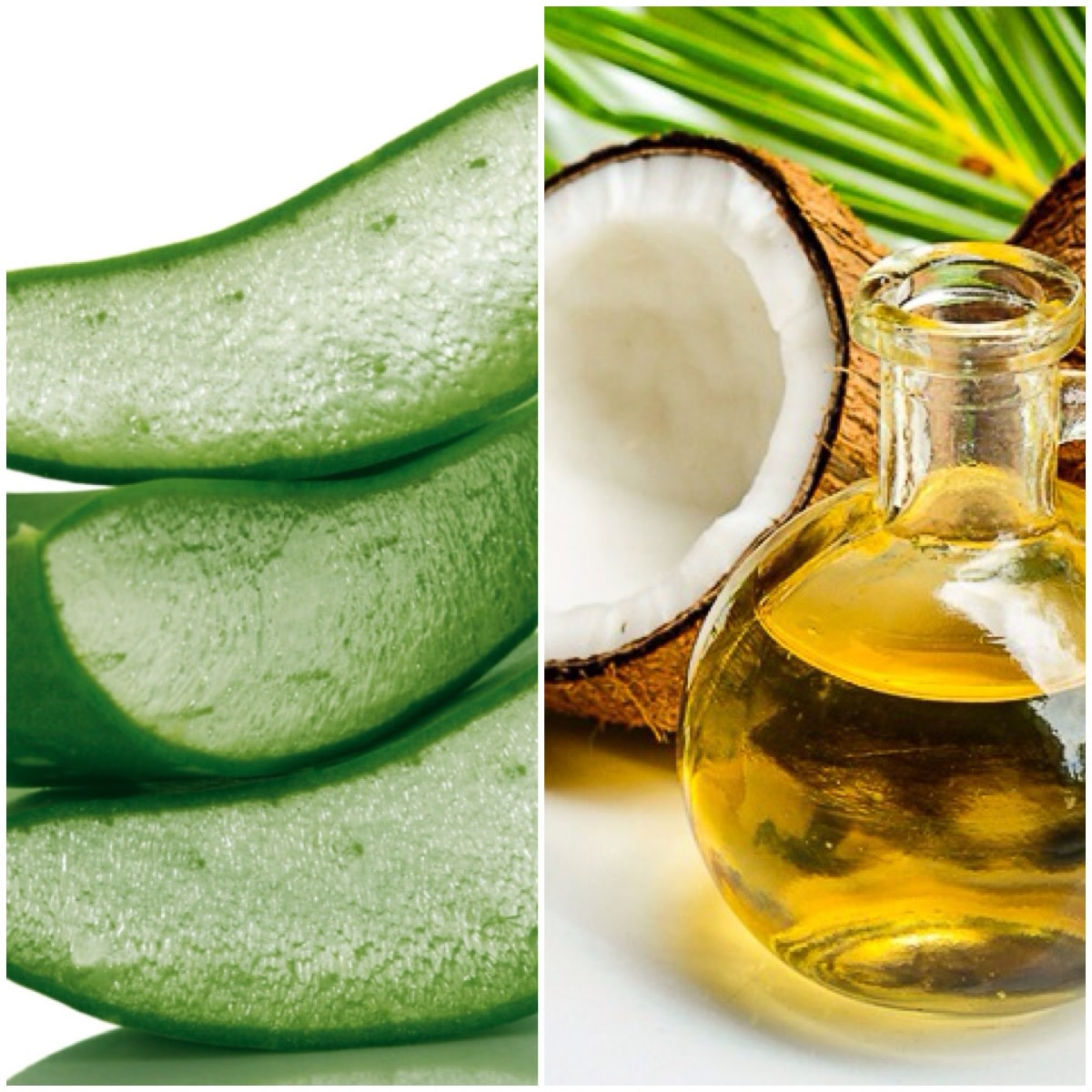 نتيجة بحث الصور عن ‪aloe vera and coconut oil for hair‬‏