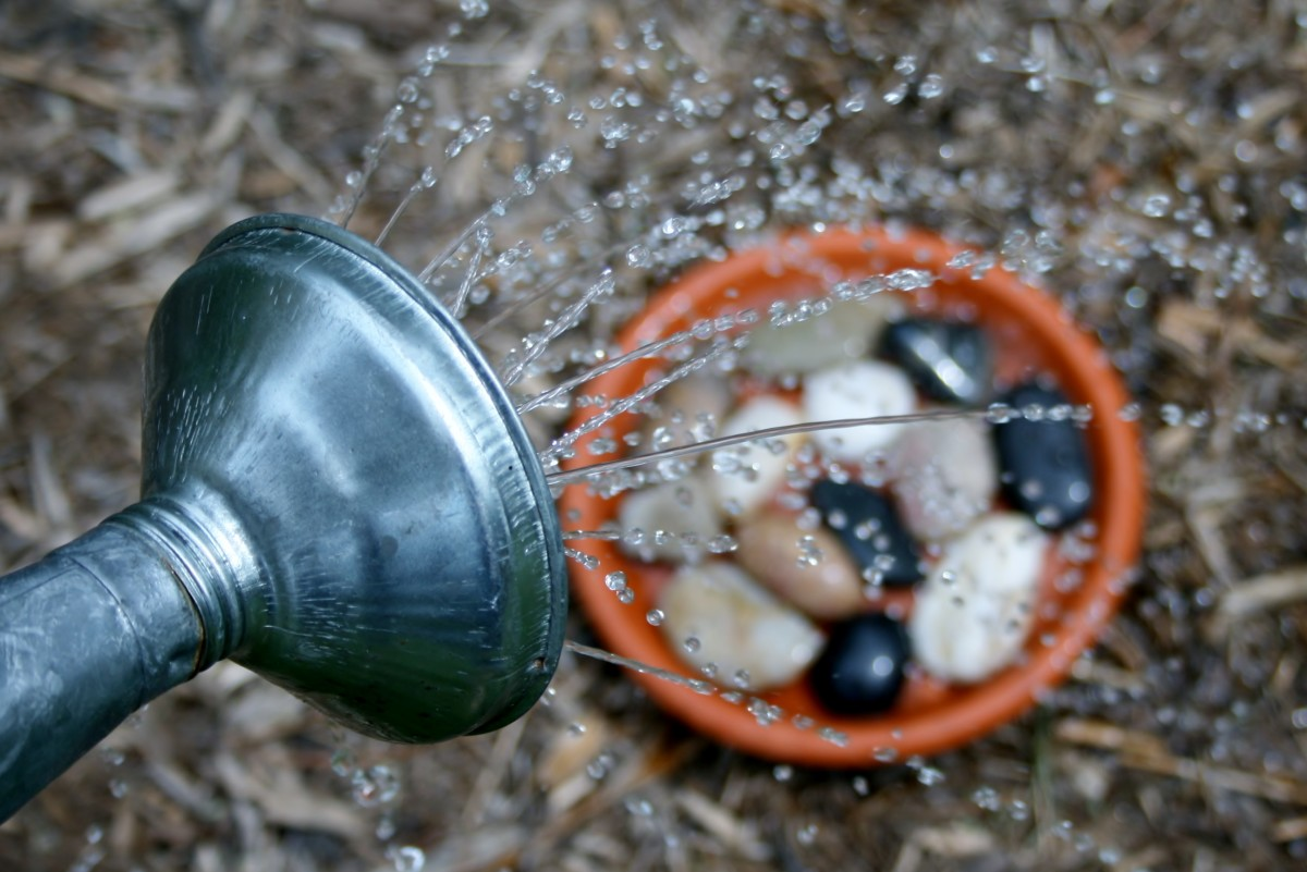 Reapply water as needed to your rocky water pot bottoms.