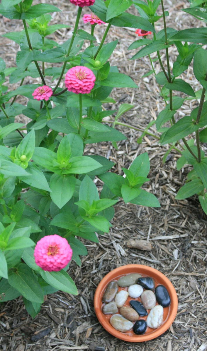 Flat flowers like zinnias make it easy for butterflies to land and sip nectar comfortably.