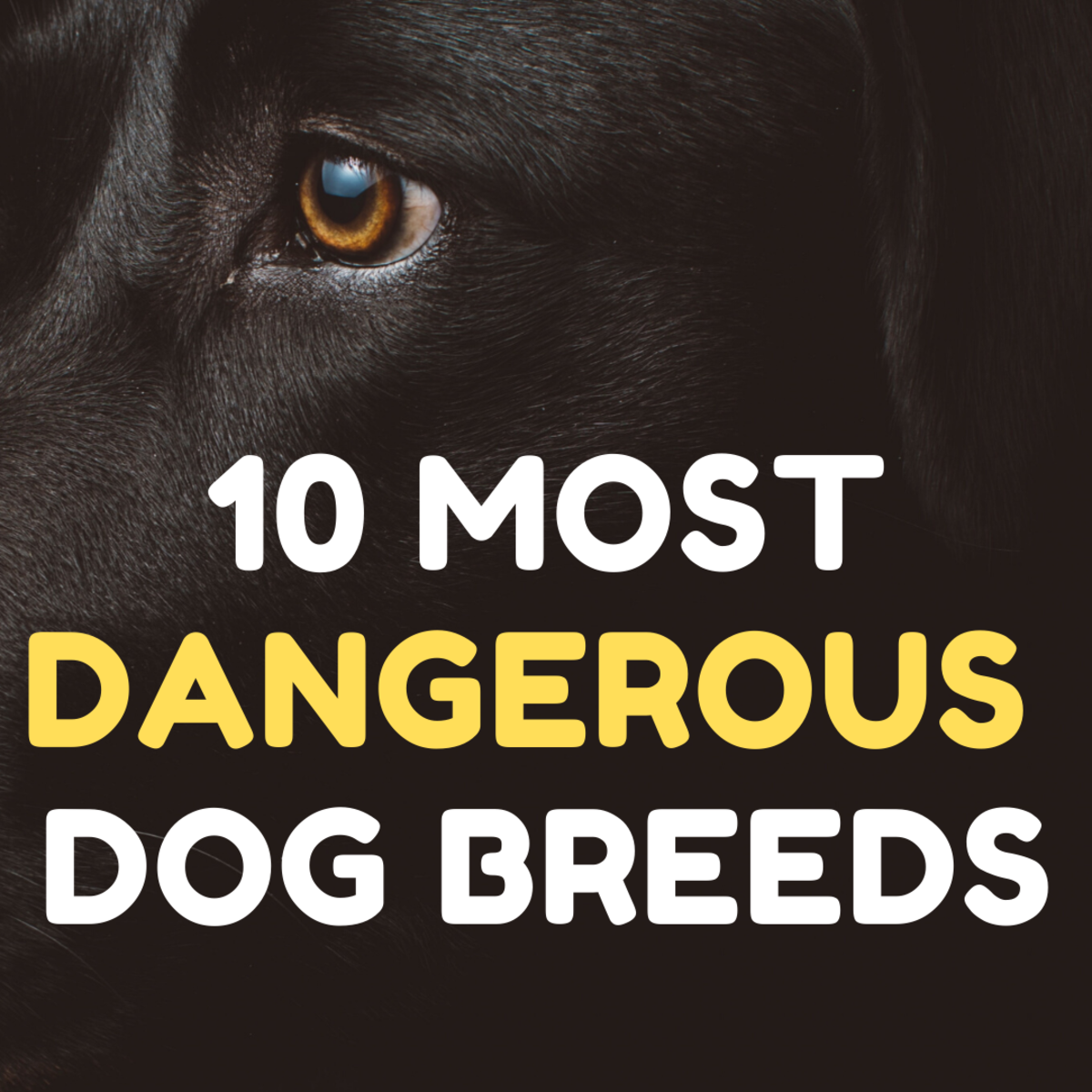 The 10 Most Dangerous Dog Breeds
