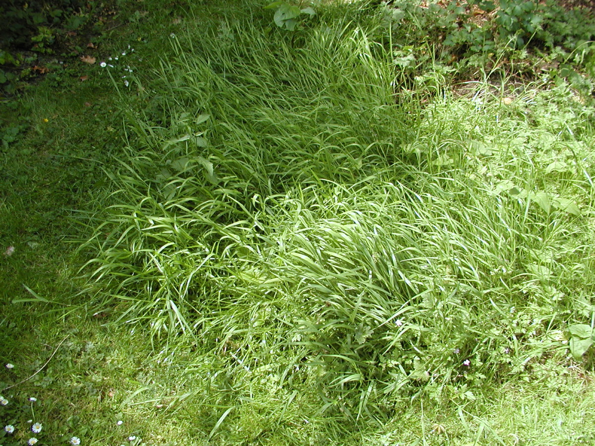 Lush, green, grass and weeds
