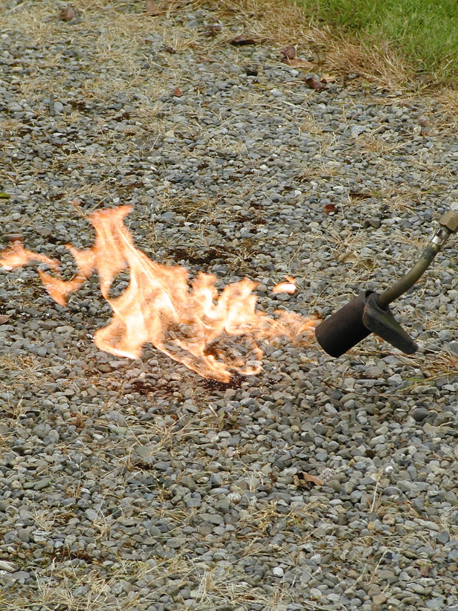 Burning weeds with a butane/propane blow torch