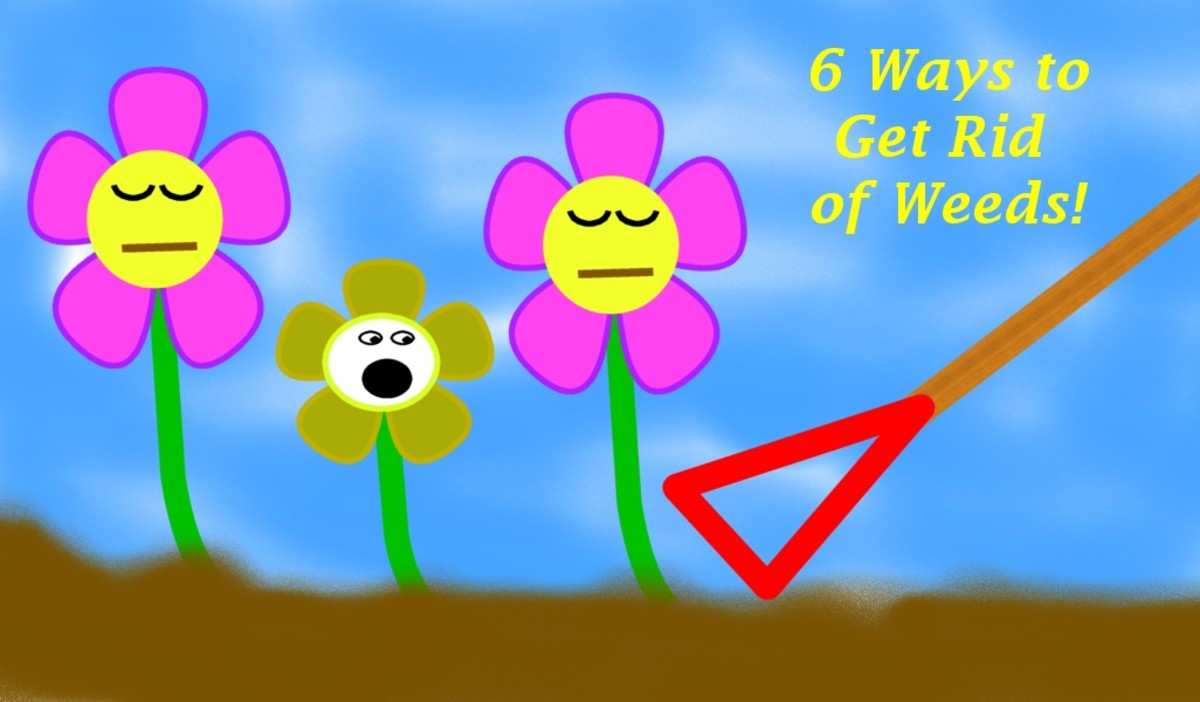 5-ways-to-kill-weeds-in-your-garden
