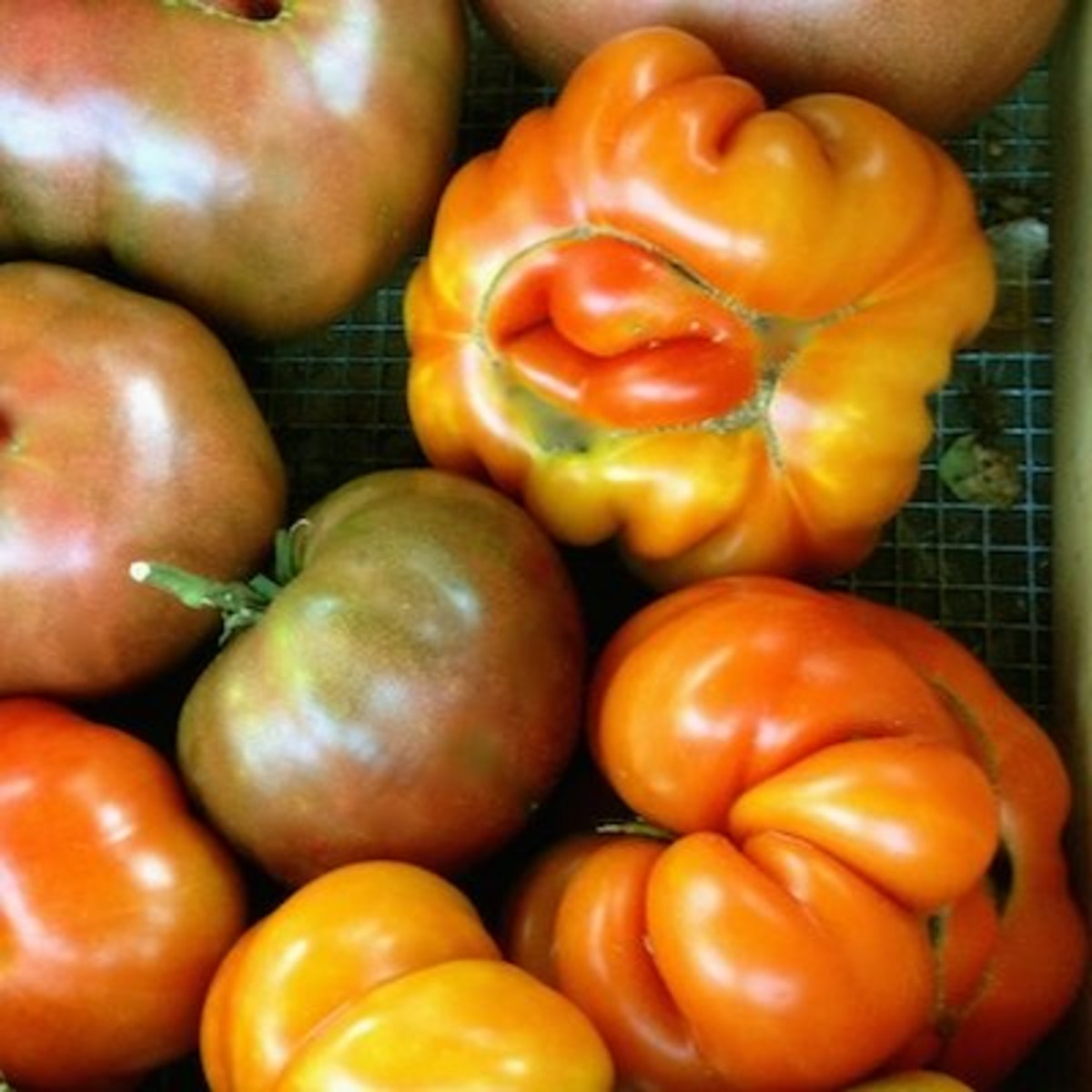 They may not be the prettiest tomatoes, but they still taste like vine-ripened and home-grown.