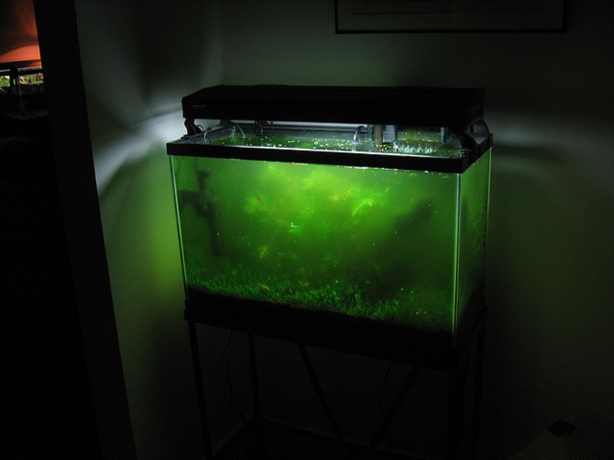 If your tank looks like this, you need some algae eater fish!