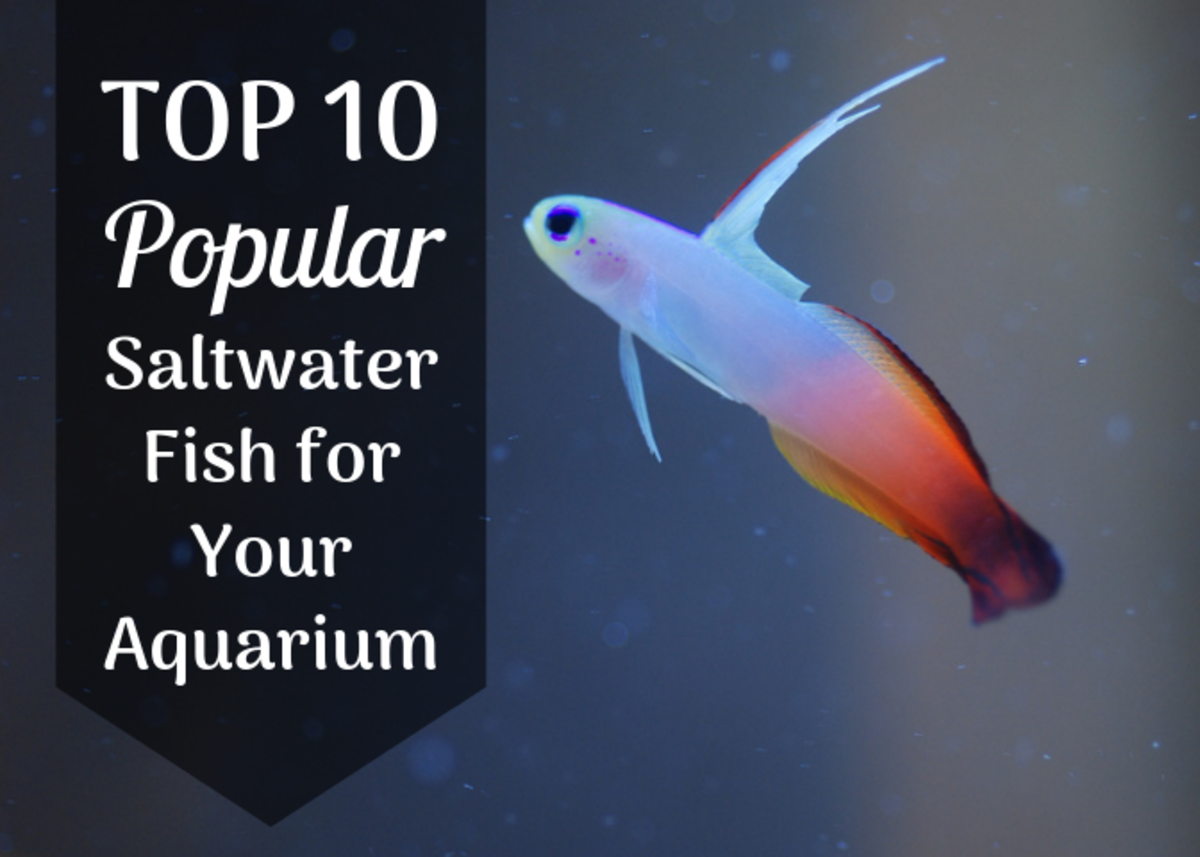 Discover the 10 best-selling saltwater fish in the United States. The fish above is a type of goby.