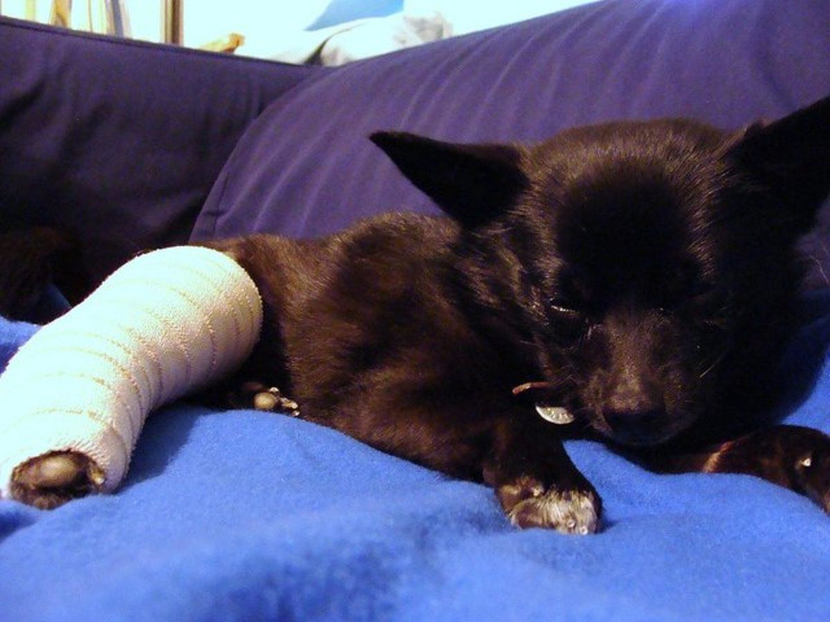 How Do I Know If My Dog Has a Broken Bone and What Should I Do?