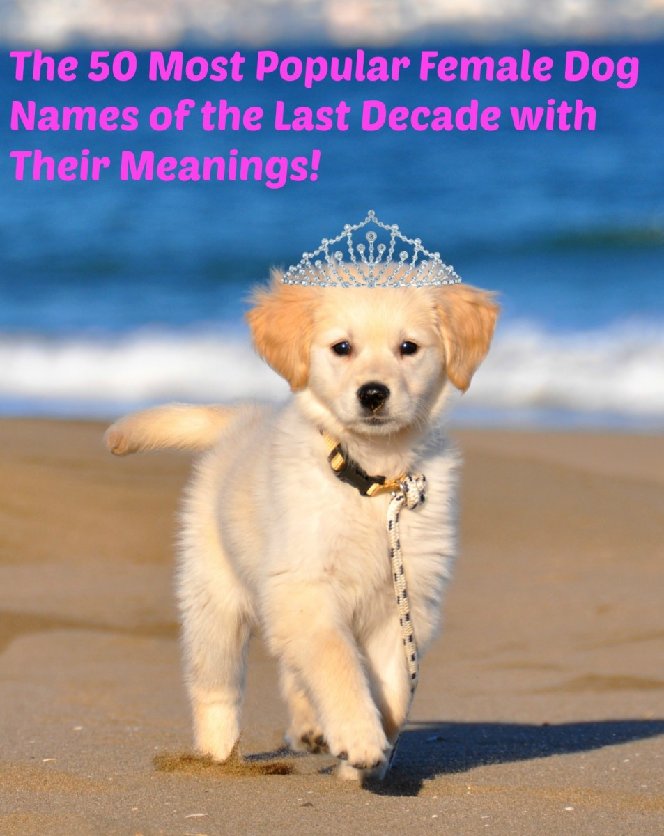 Most Popular Female Dog Names of the Decade