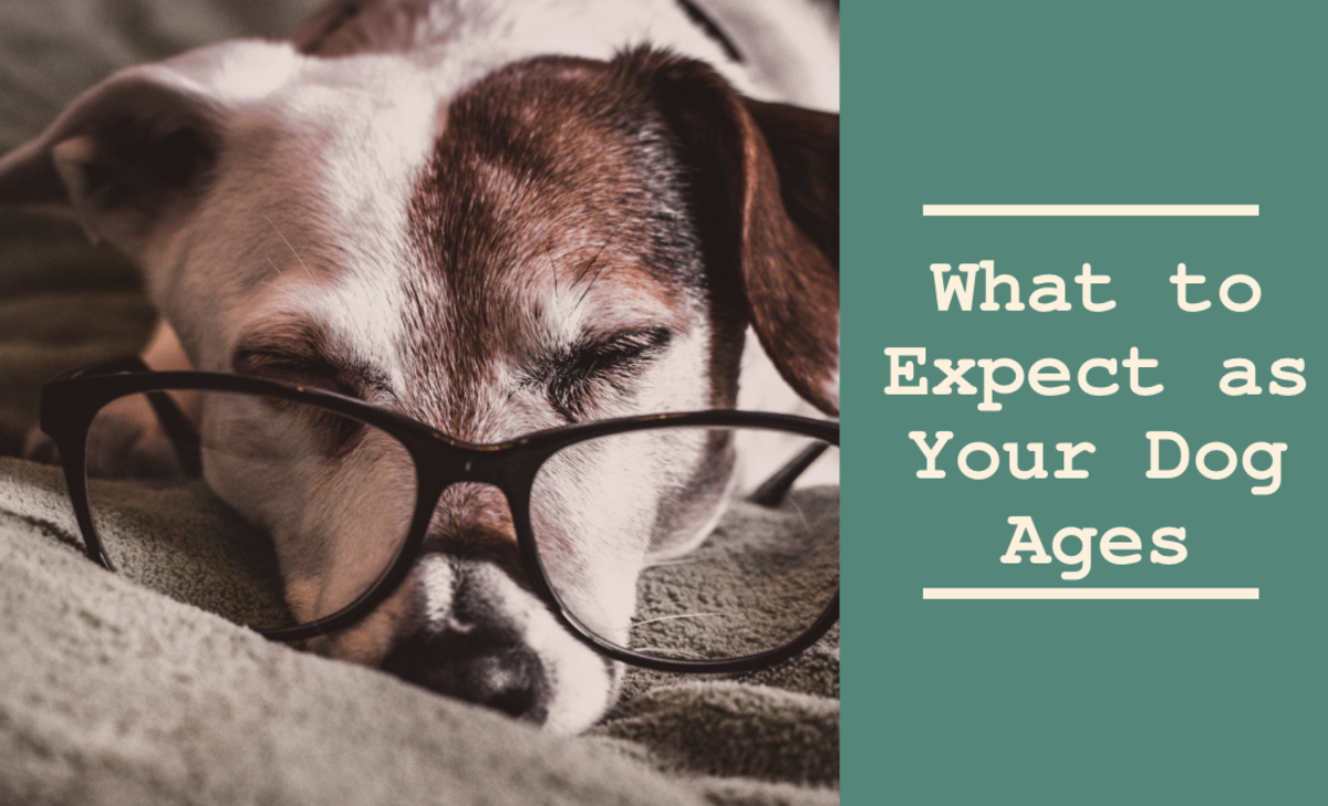 Senior Dogs: What to Expect as Your Dog Ages