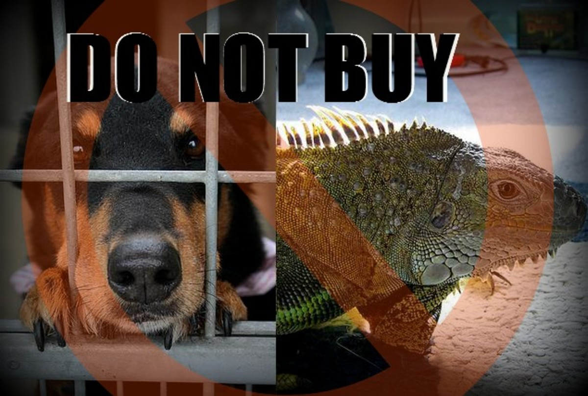 10 Pets You Should Adopt, Not Buy