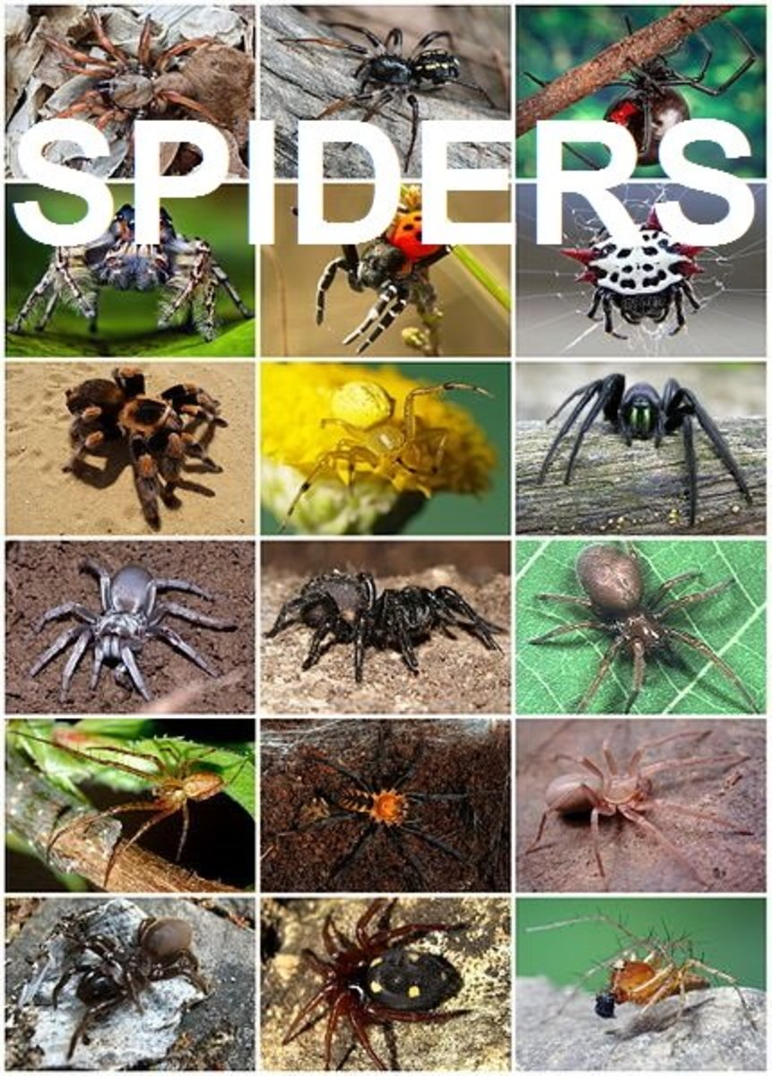 Everything you ever wanted to know about spiders but were too terrified to ask!
