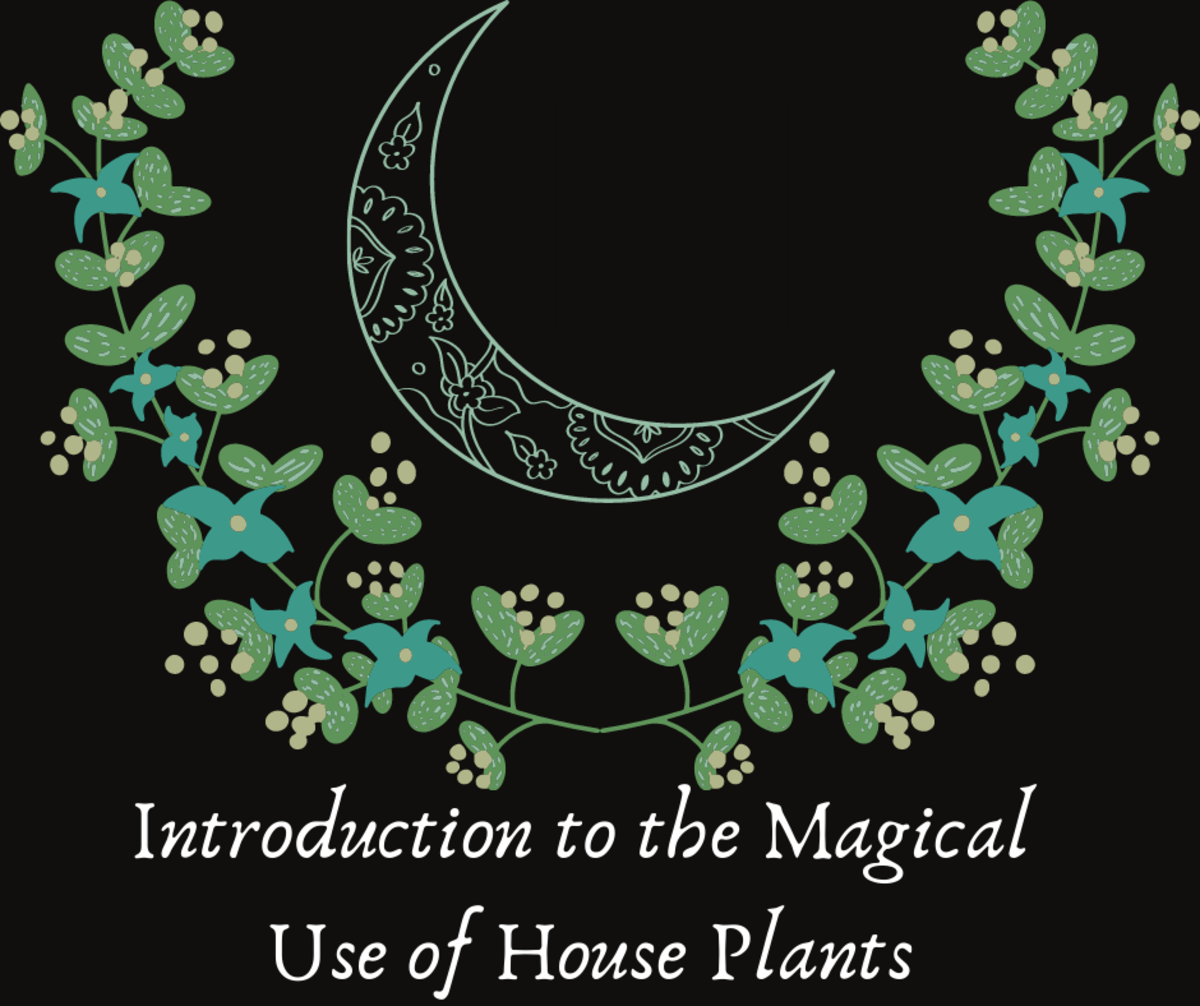 Introduction to the Magical Use of House Plants