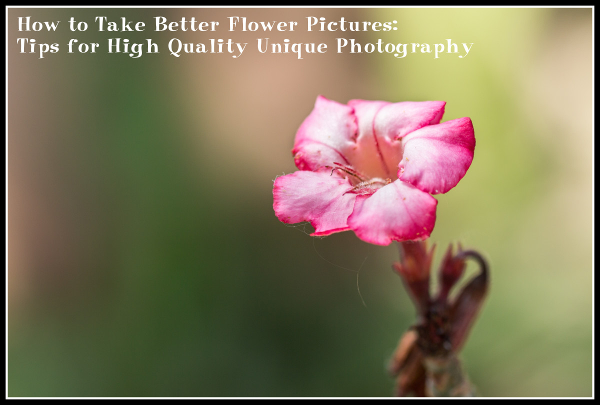 How to Take Better Flower Pictures: Tips for Unique High Quality Photography