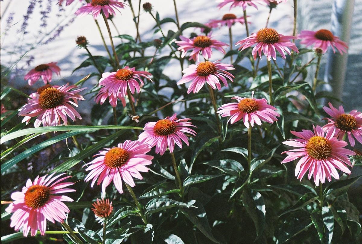 My Adventures in Xeriscape Gardening