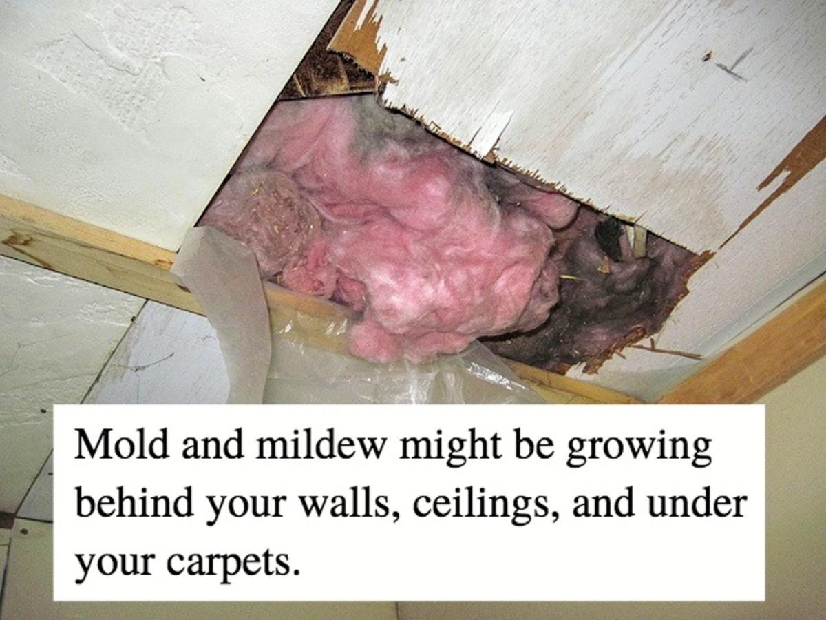 how to get rid of musty basement smells dengarden. Black Bedroom Furniture Sets. Home Design Ideas