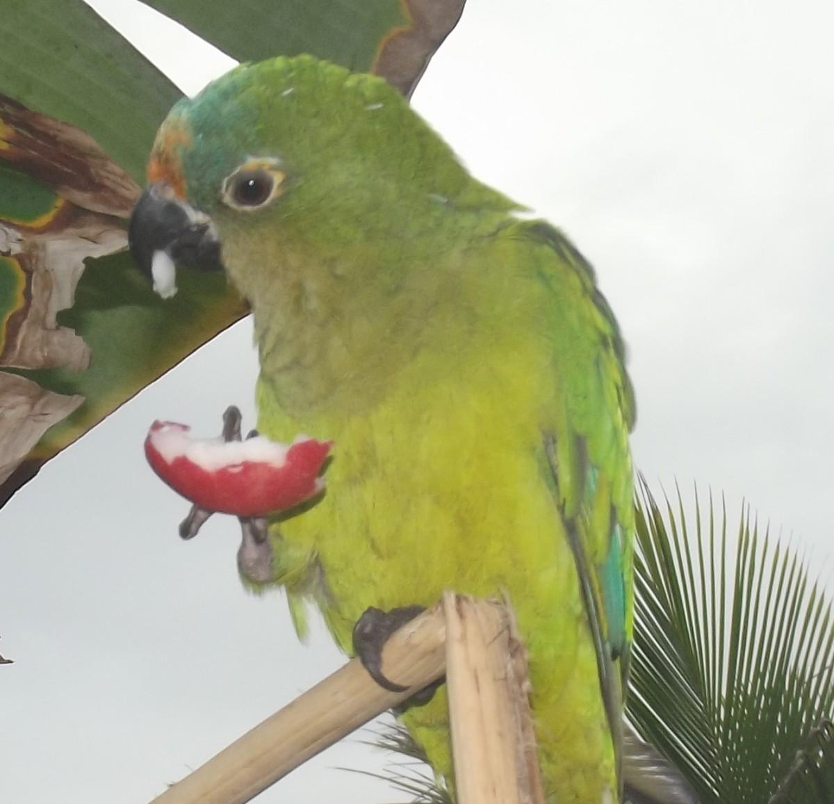 Green birds names