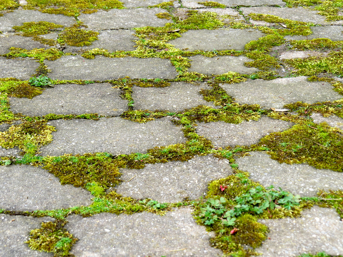 Moss planted between concrete blocks.