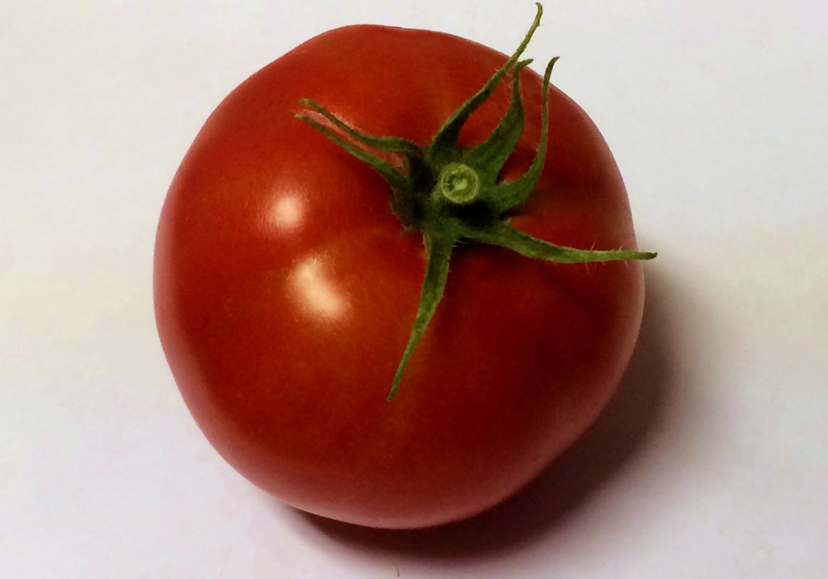 Make sure the tomatoes have developed a solid color before you pick them.
