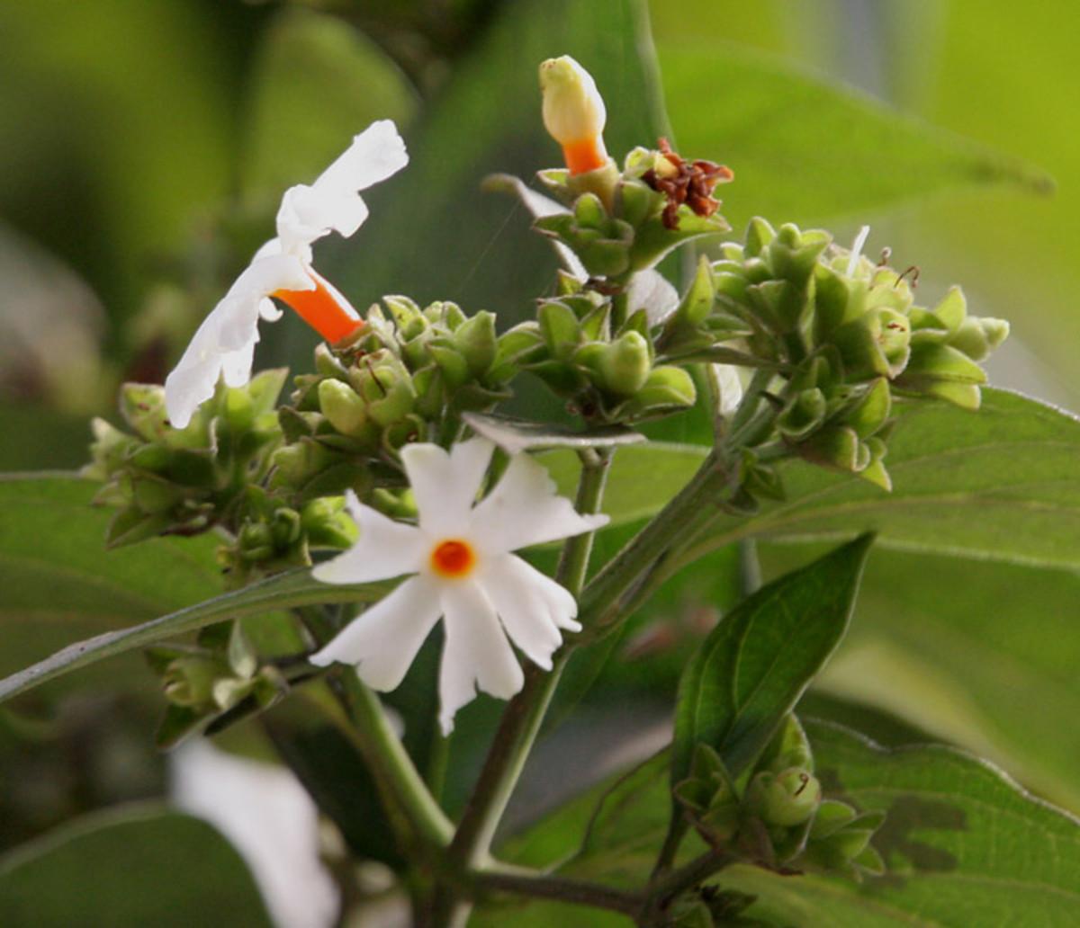 6 de los árboles y arbustos más fragantes en primavera