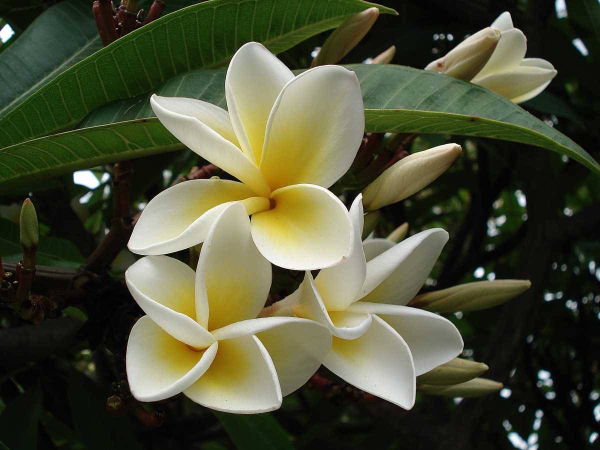 List of most fragrant flowers - Scented indoor plants that give your home a great fragrance ...