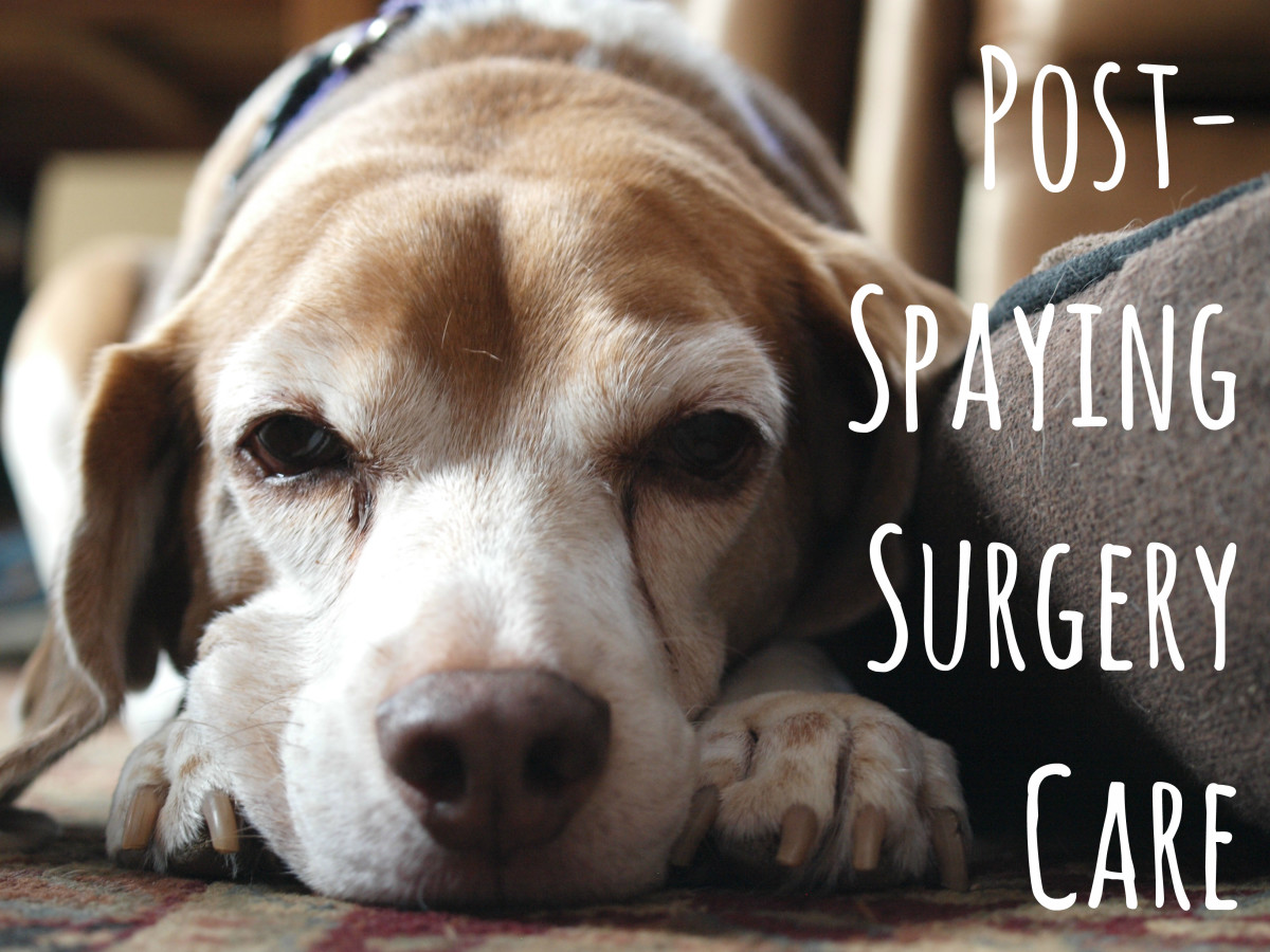 "Many pet owners are unprepared for their dog's post-operative symptoms, and they're left wondering ""Is this normal?"""