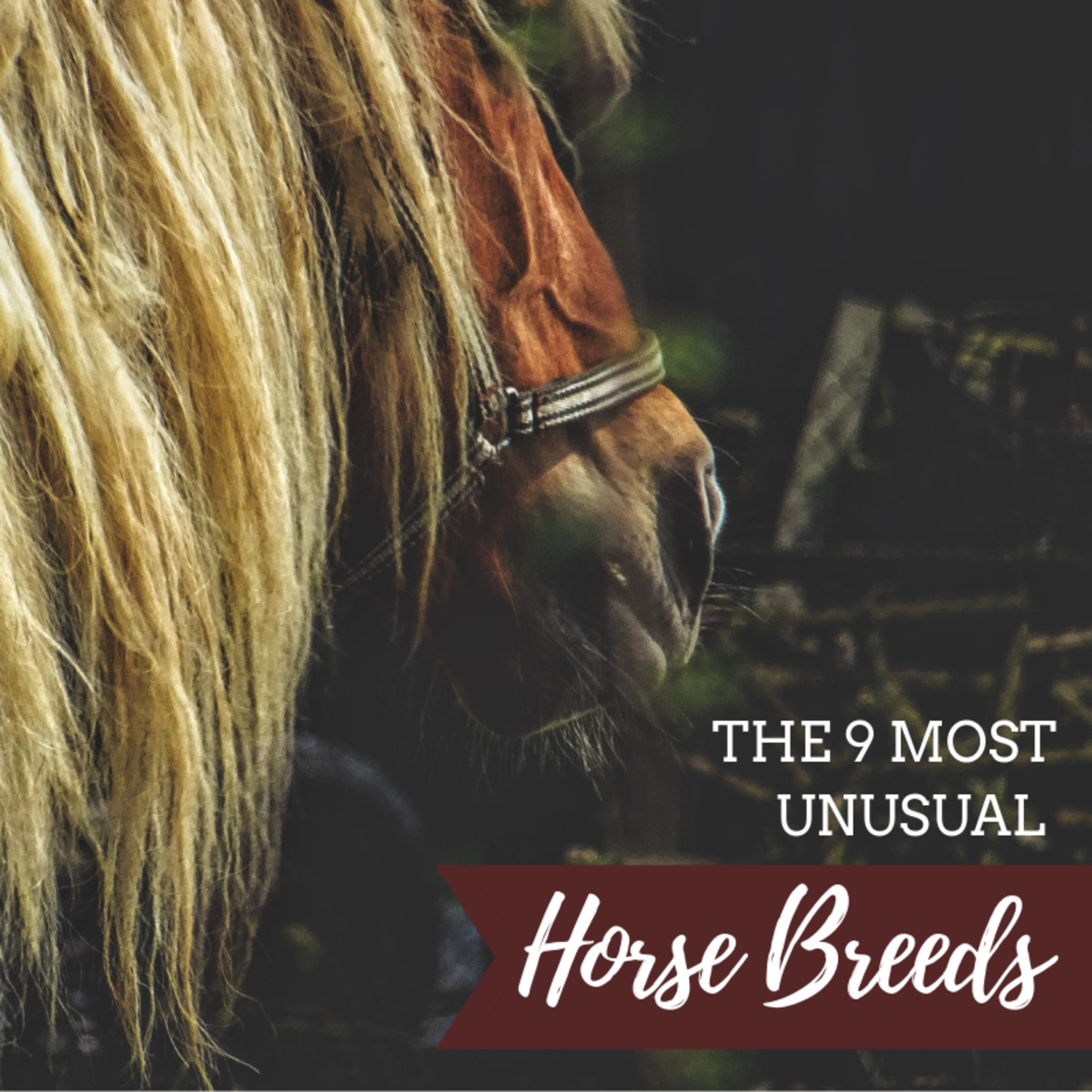 Since the domestication of horses some 6,000 years ago, many breeds and varieties have developed—these 9 are among the most unique.