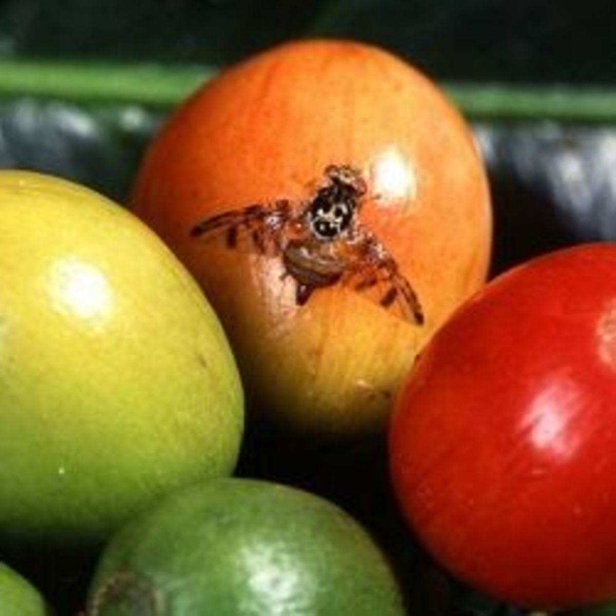 how to get rid of fruit flies permanently