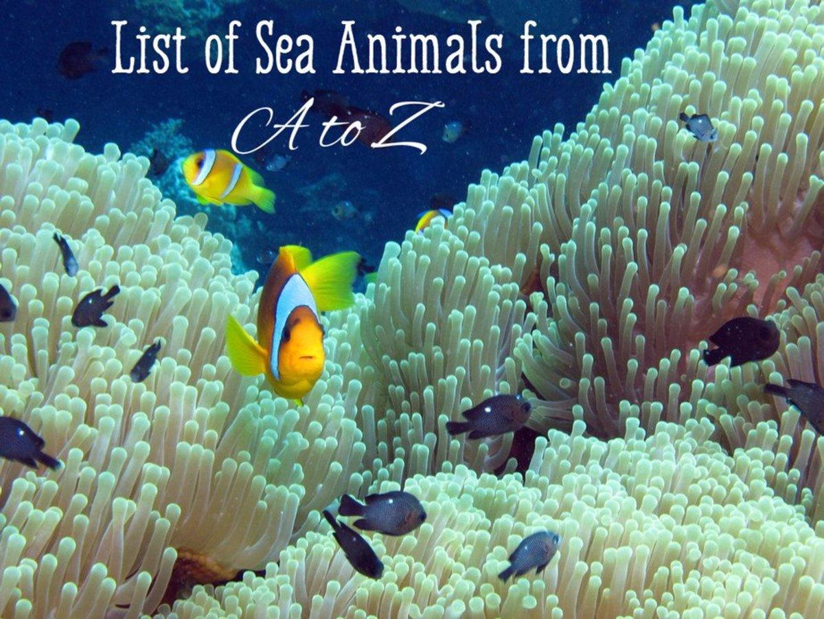 List of Sea Animals A-...