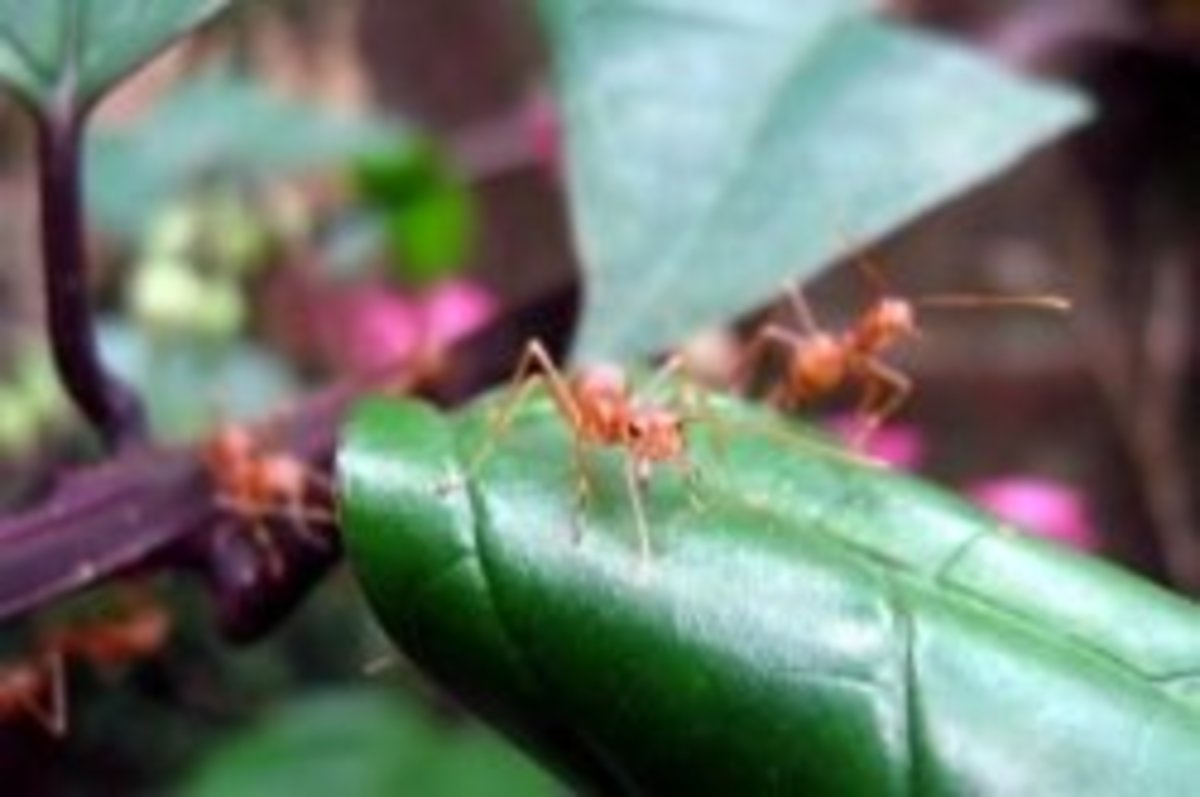 How to Treat Fire Ant Bites -- Treatment Tips and Home Remedies
