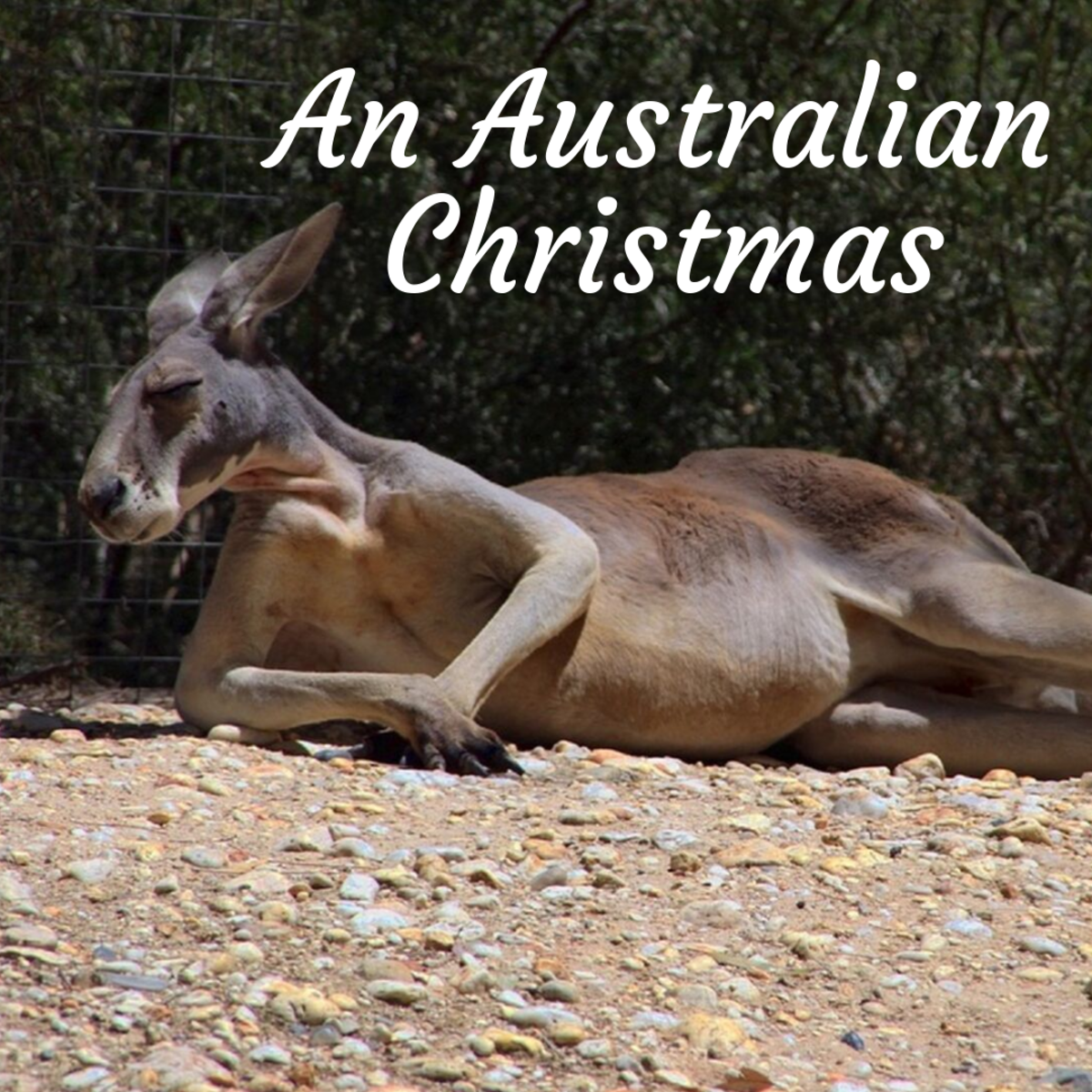 This article will give you an idea of what Christmas is like down in Australia.