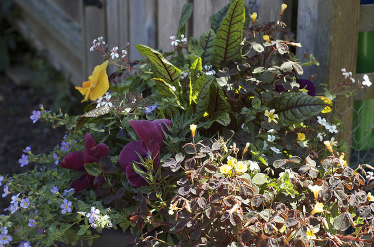 A plentiful overflow of flowers in containers add to the full  and lush look.