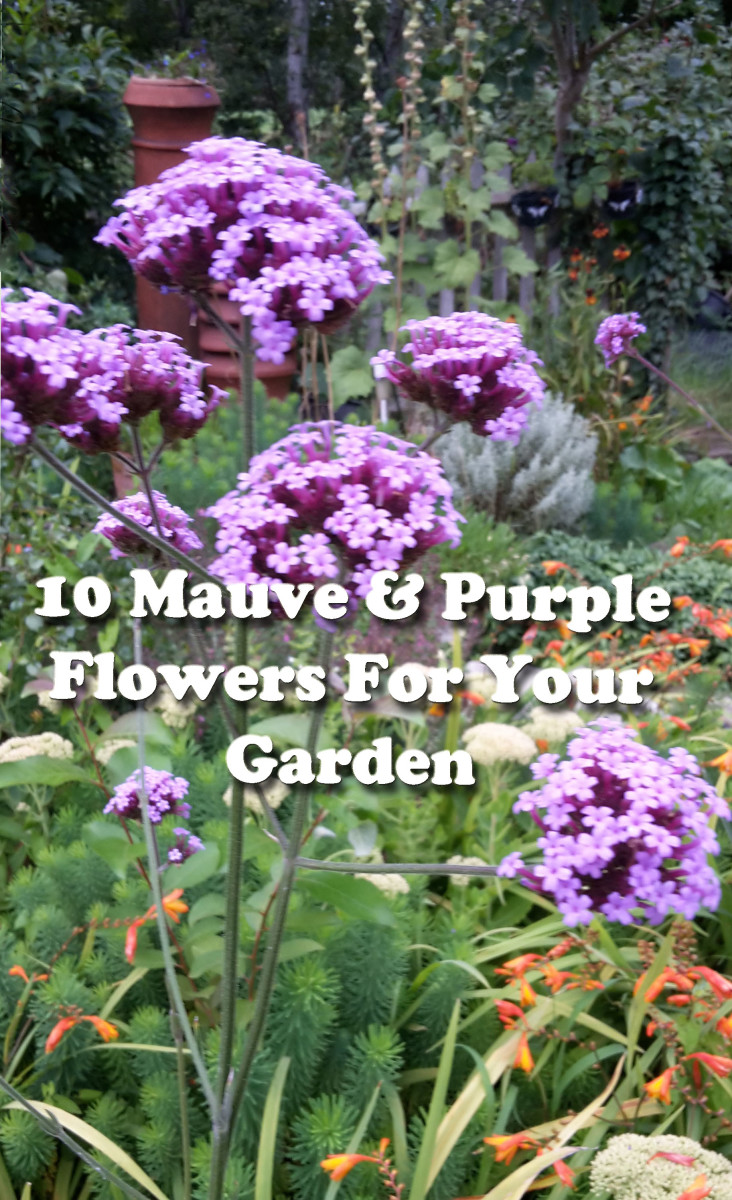 10 Mauve and Purple Flowers for Your Garden