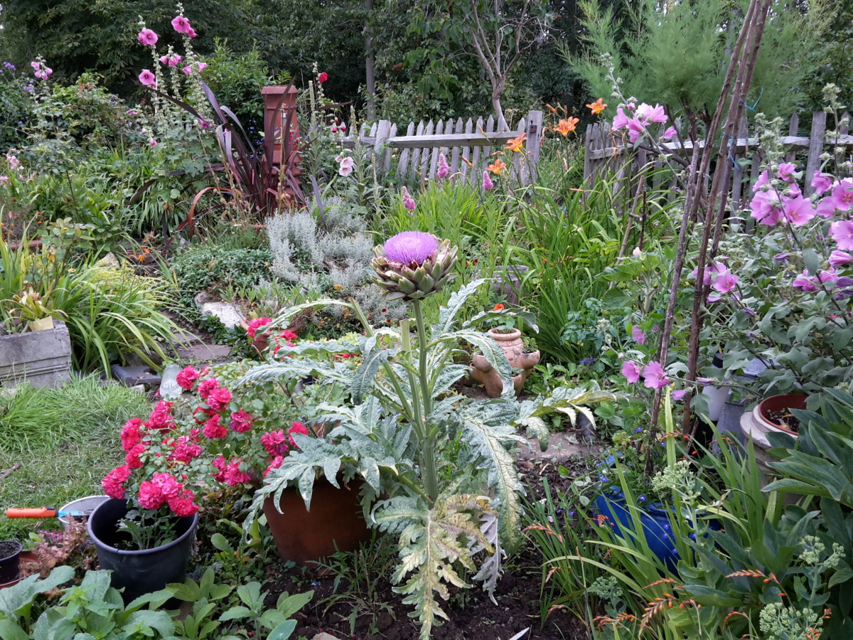 Here is a nice assortment of summer artichoke, lavatera, hollyhock, and roses—notice how the colors blend.