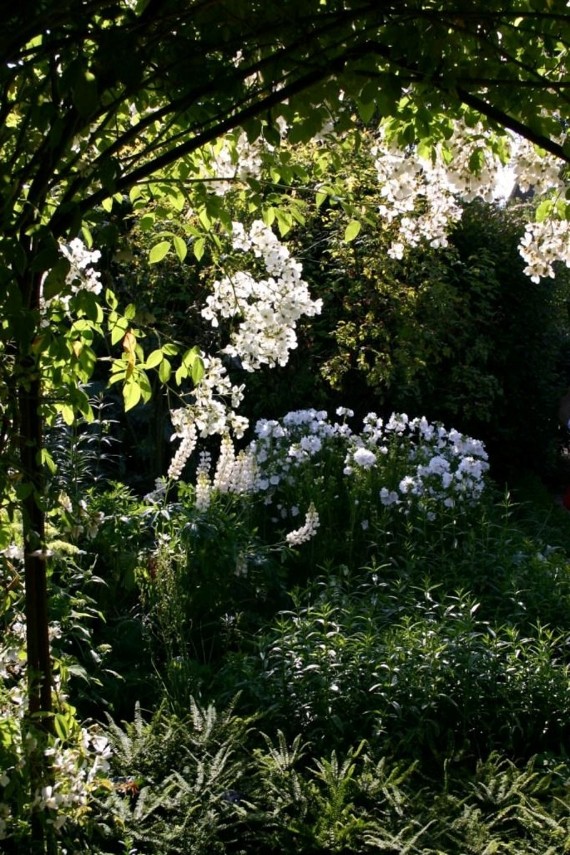 This is the white garden at Sissinghurst, a famous English monochrome garden.