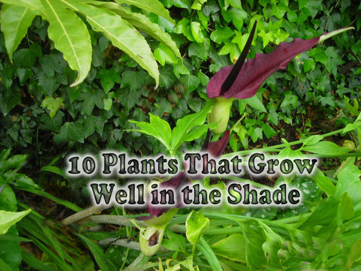 10 Plants That Grow Well in the Shade - Part 3