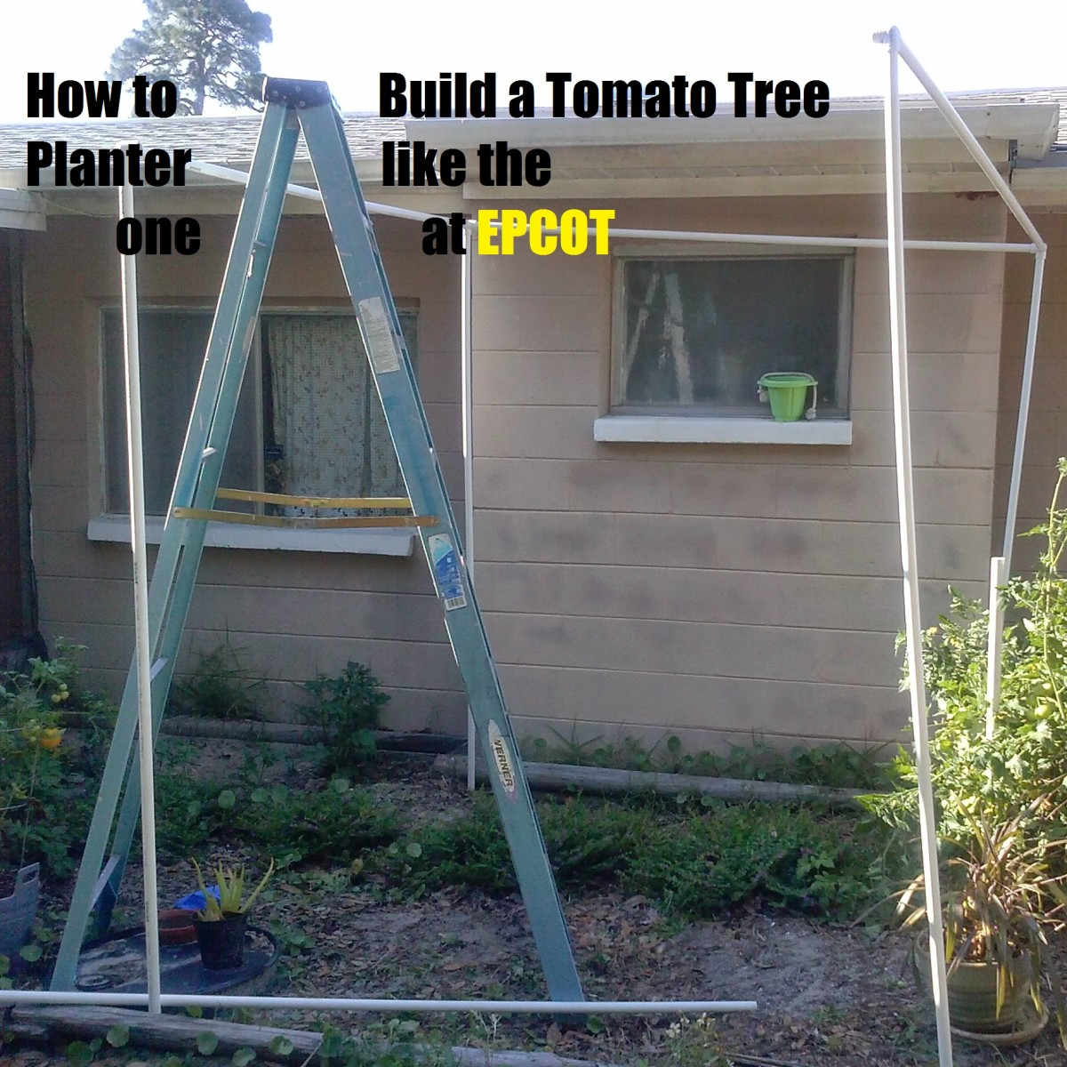 How to Build a Tomato Tree Plant Like Disneyworld's Epcot Ride