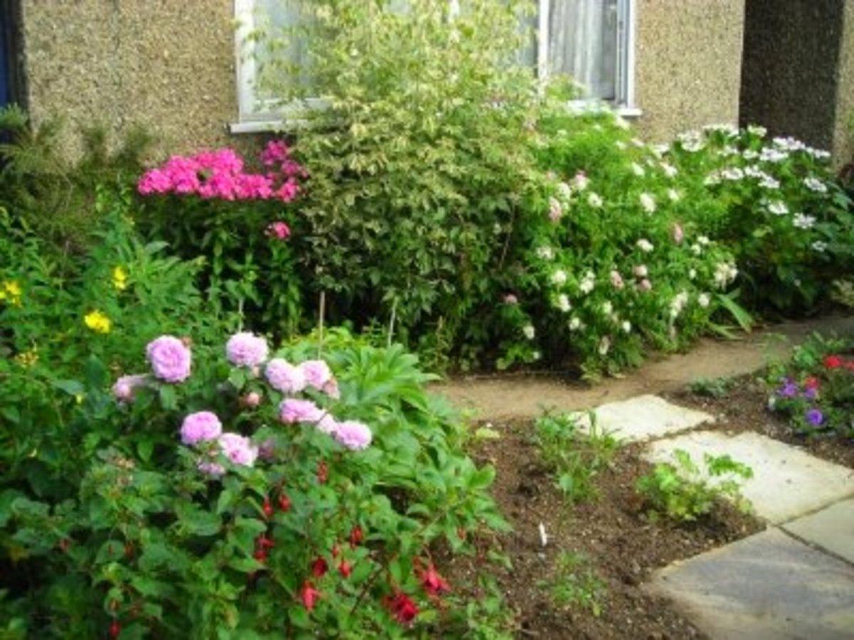 designing-small-front-garden