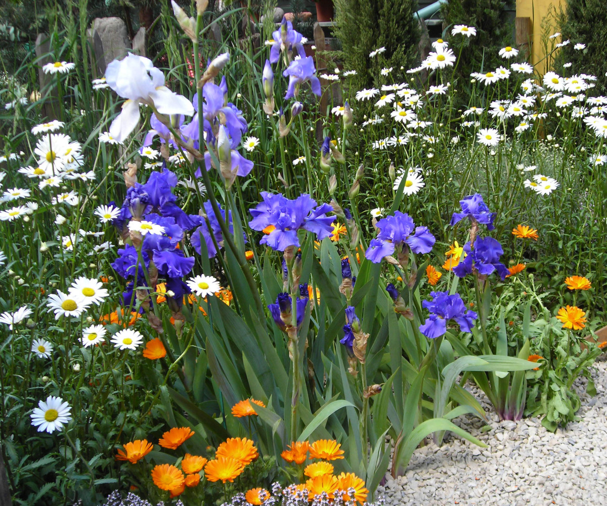 Poisonous Plant Iris at Chelsea Flower Show