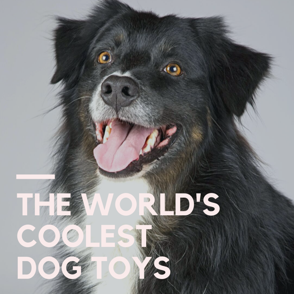 Your dogs won't be able to take their eyes off these toys!