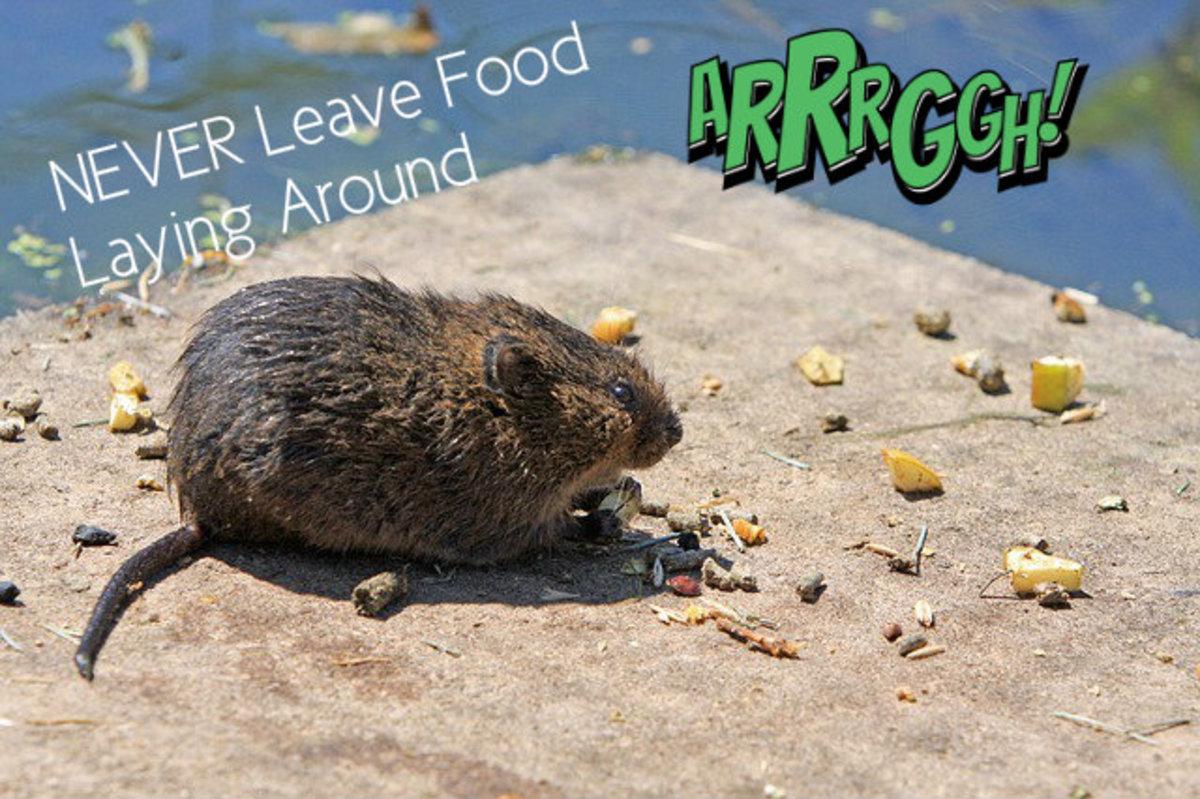Get Rid of Rats Under A Deck