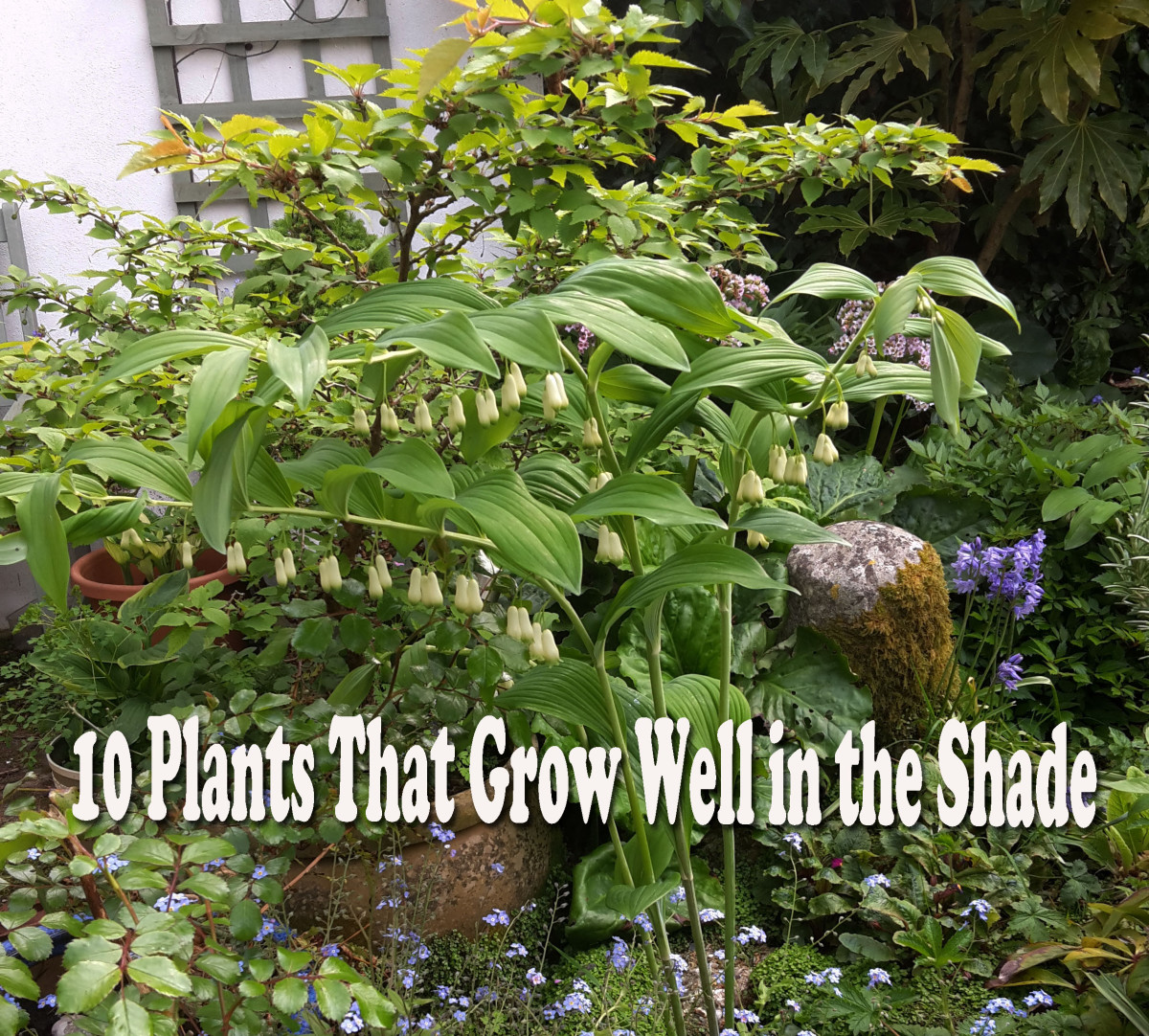 10 Plants That Will Grow In The Shade Dengarden