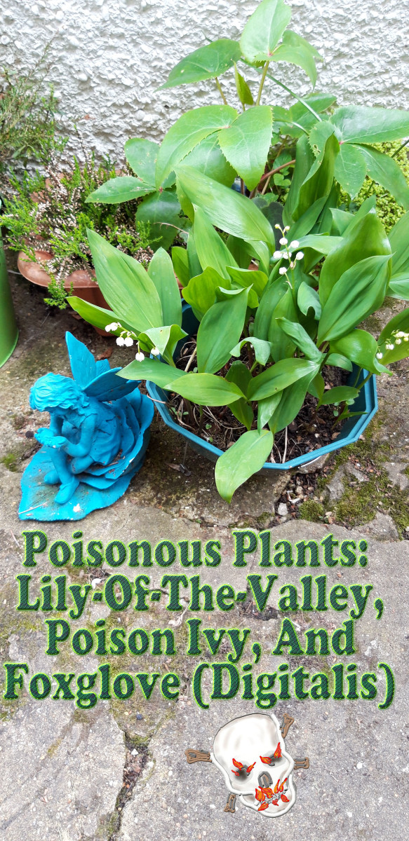 Poisonous Plants: Lily-of-the-Valley, Poison Ivy, and Foxglove (Digitalis)