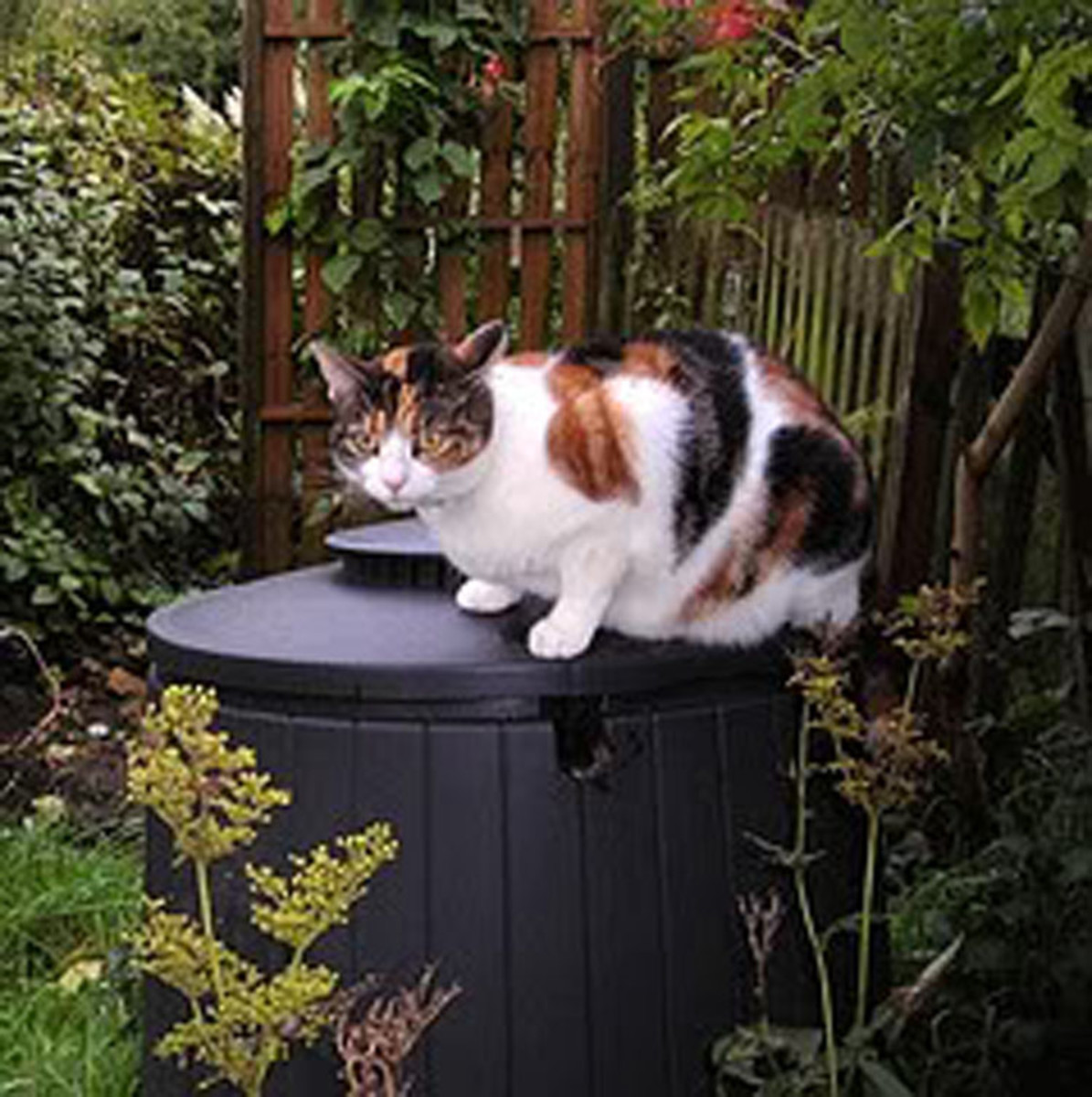 My cat, Pussums, sitting on the compost bin.