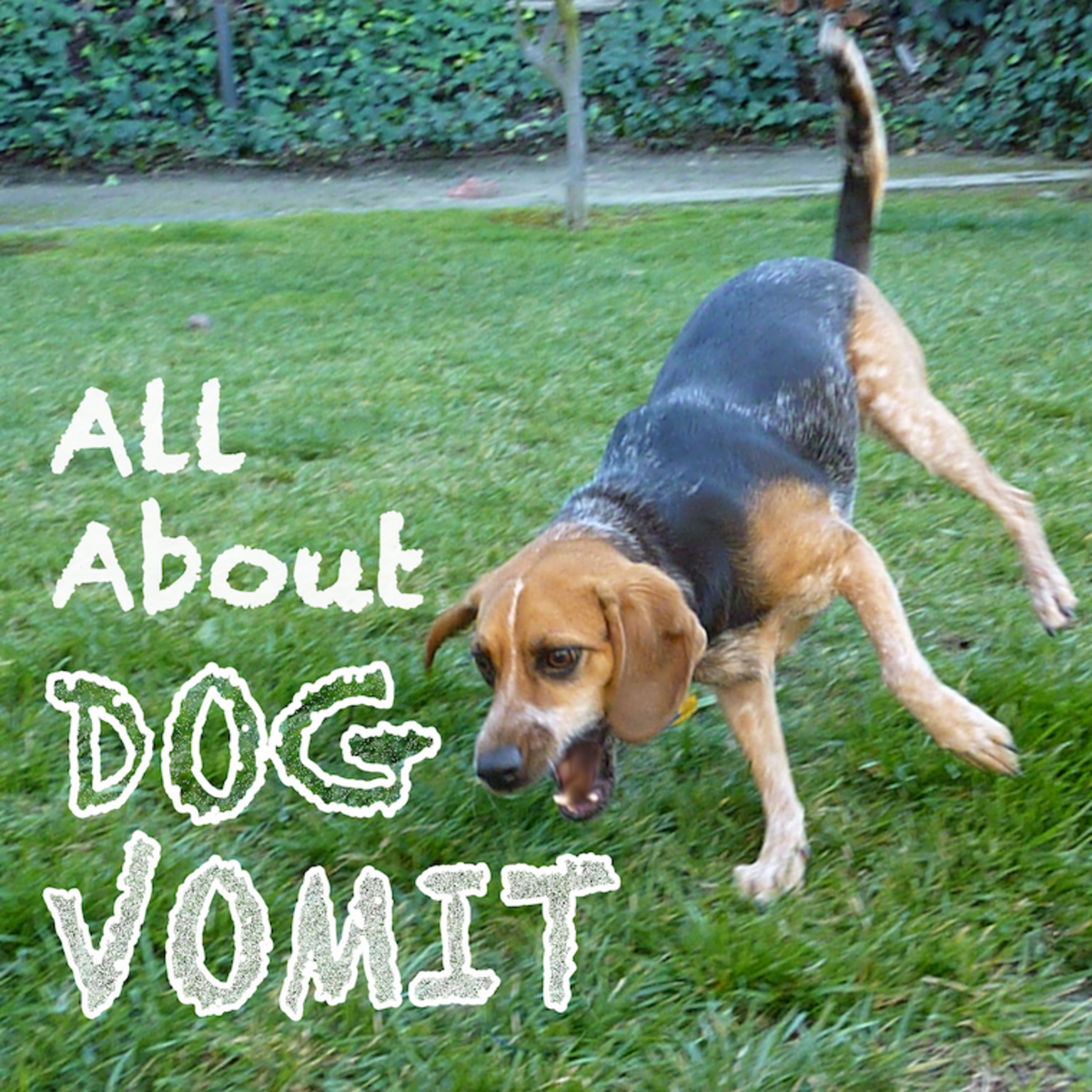 All About Dog Vomit