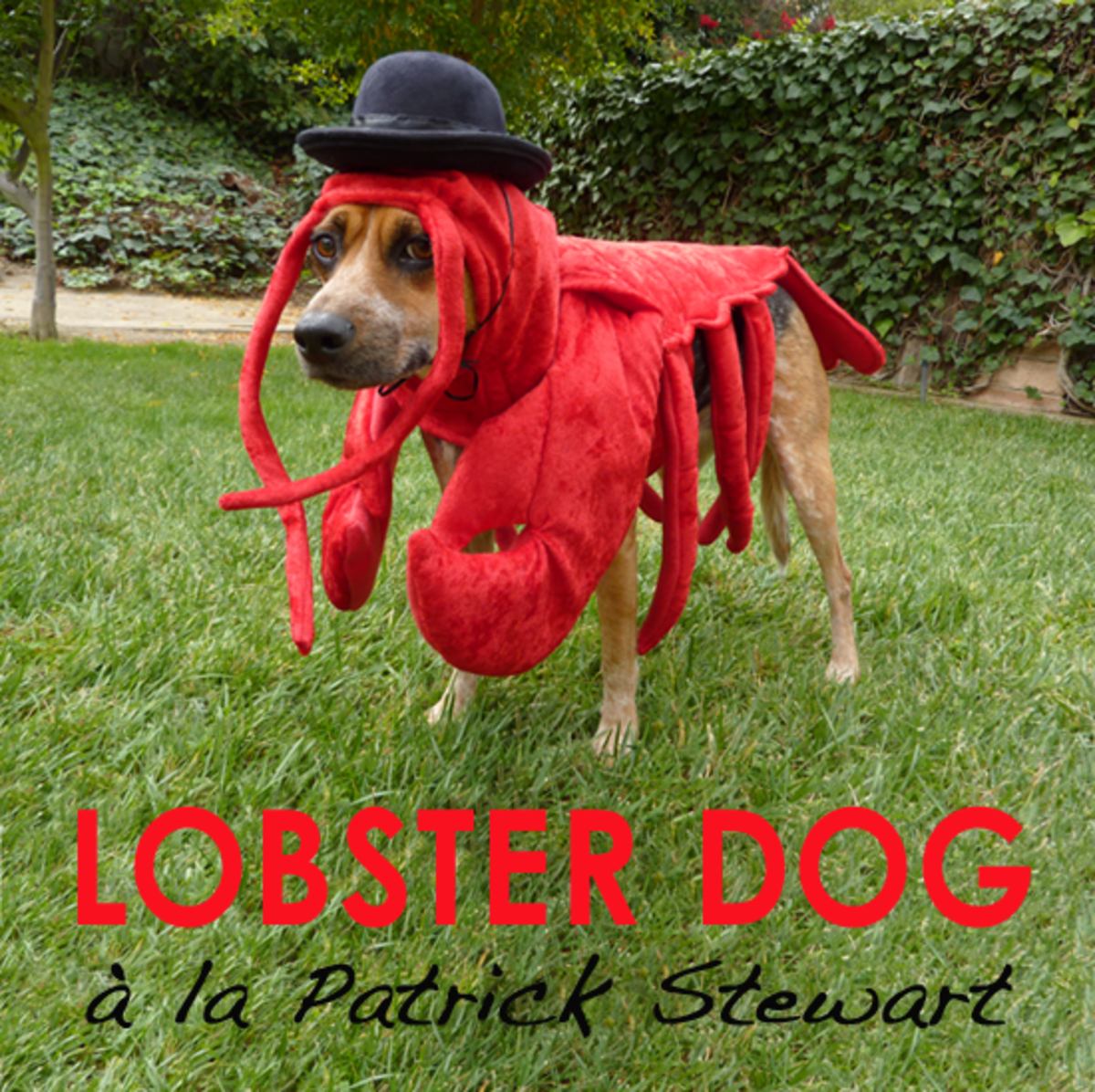 How To Make a Lobster Costume for Your Dog