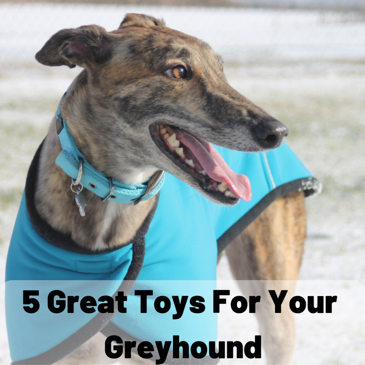 Here are some great toys to get for your greyhound.