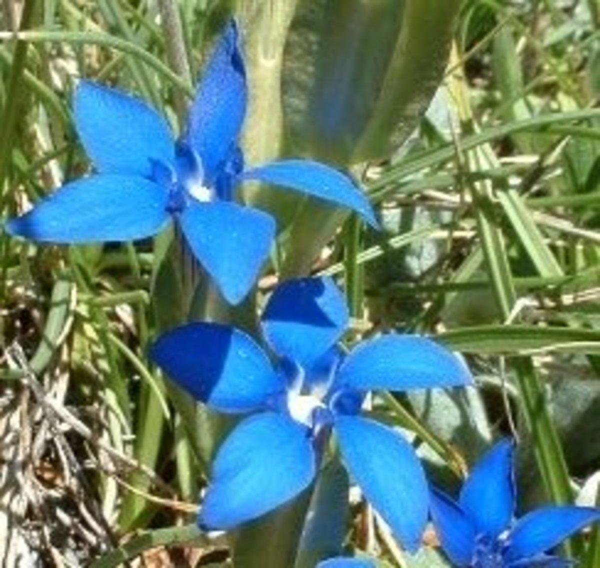 Significado de flores y colores - exquisitas flores de papel