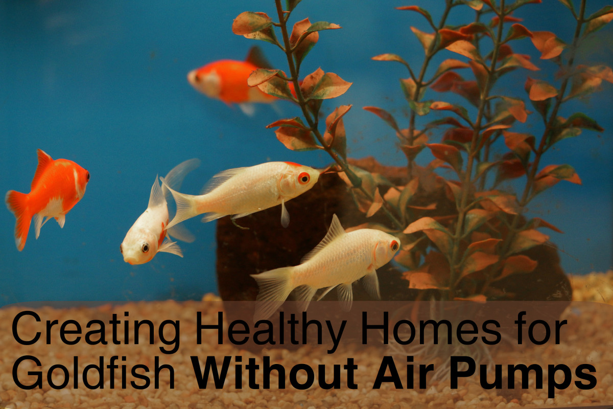Good aquarium plants are key to creating a healthy environment for goldfish when there isn't an air pump in the bowl.