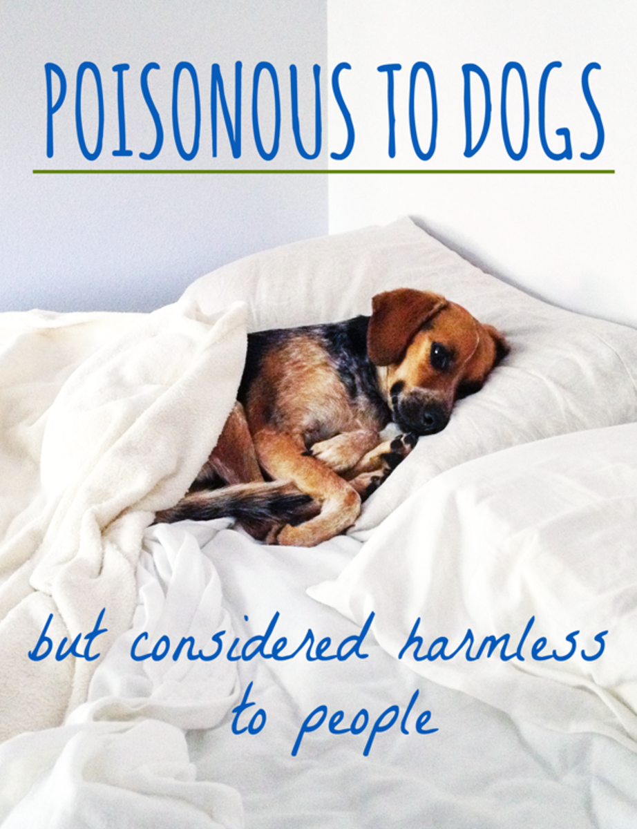 Poisonous to Dogs but Considered Harmless to People