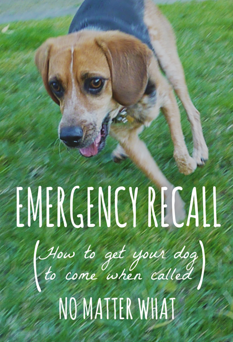 How to make sure your dog comes when called—be prepared for any emergency!